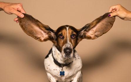 écoute réseaux sociaux